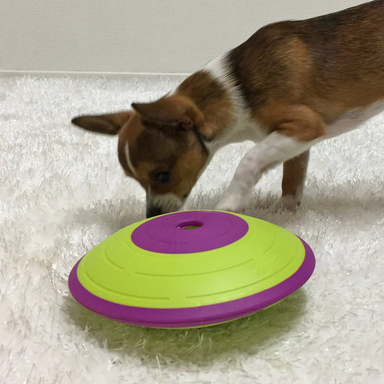 DOG TREAT MAZE - NEW