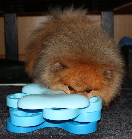 DogTornado muovi. Vaikeusastetta 2