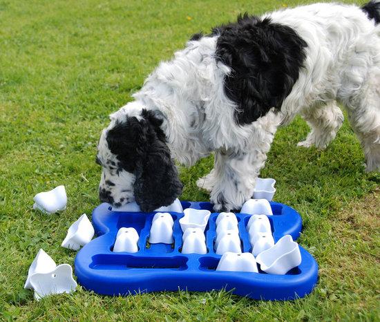3 IQ attivazione del cane giocattoli, plastica. Grado di difficoltá 2, medium