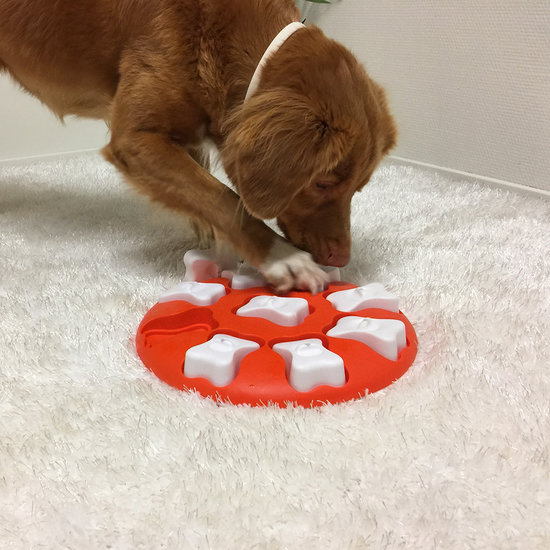 DOG SMART - NEW